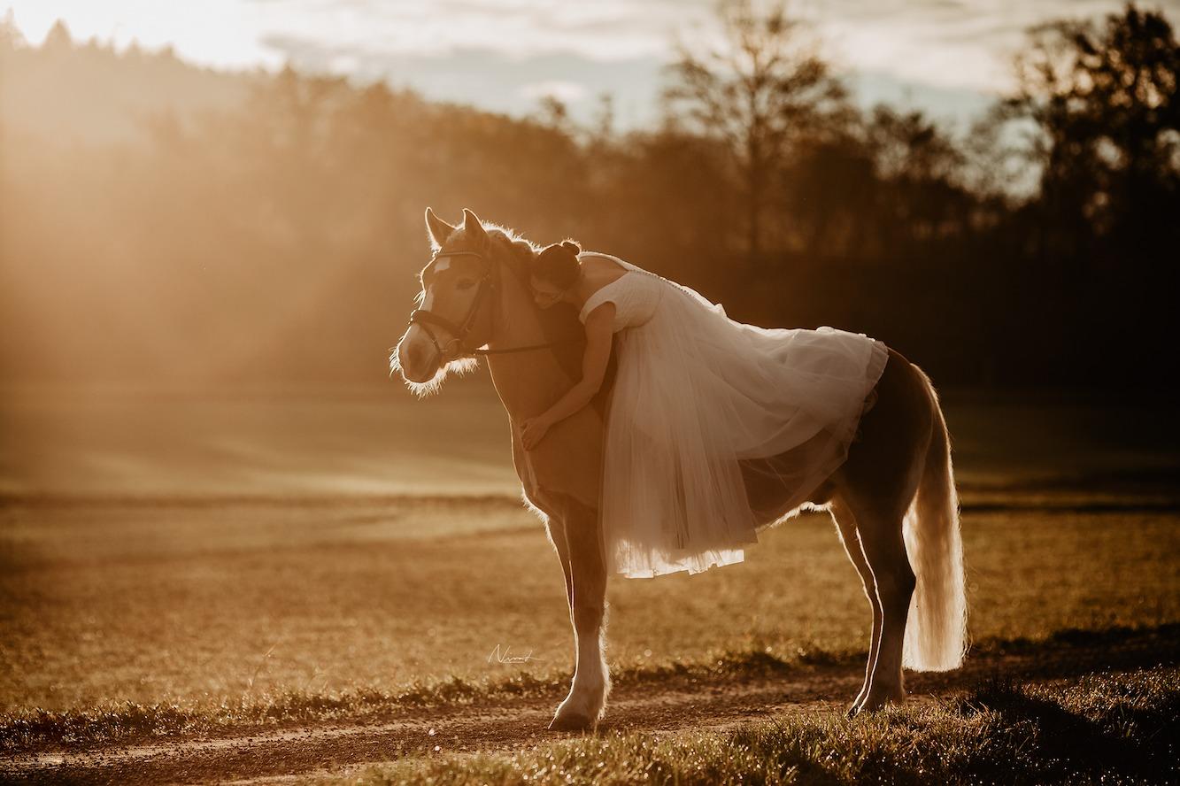 Hochzeitsfotograf tübingen - wedding with horse - haflinger gegenlicht
