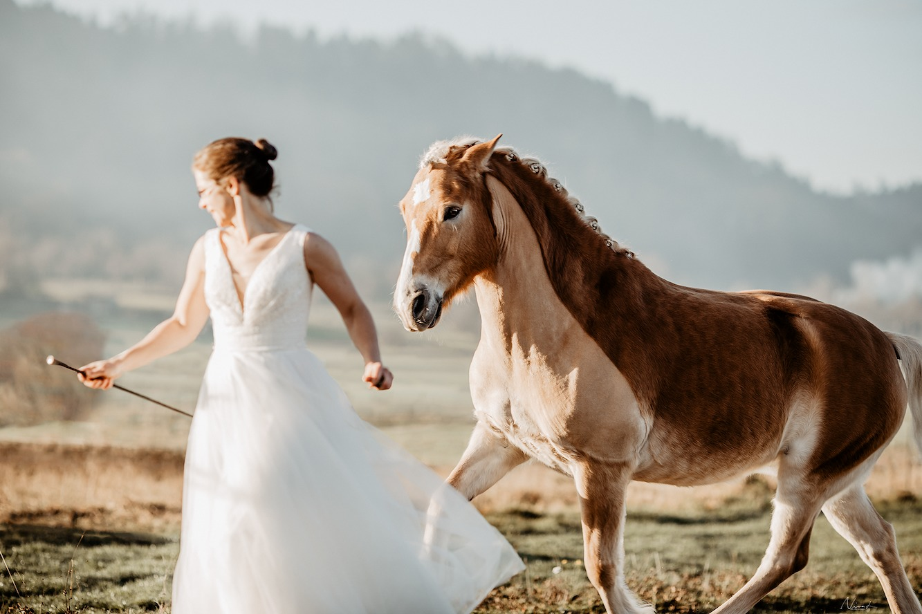 Pferdefoto tübingen - after Wedding - pferd